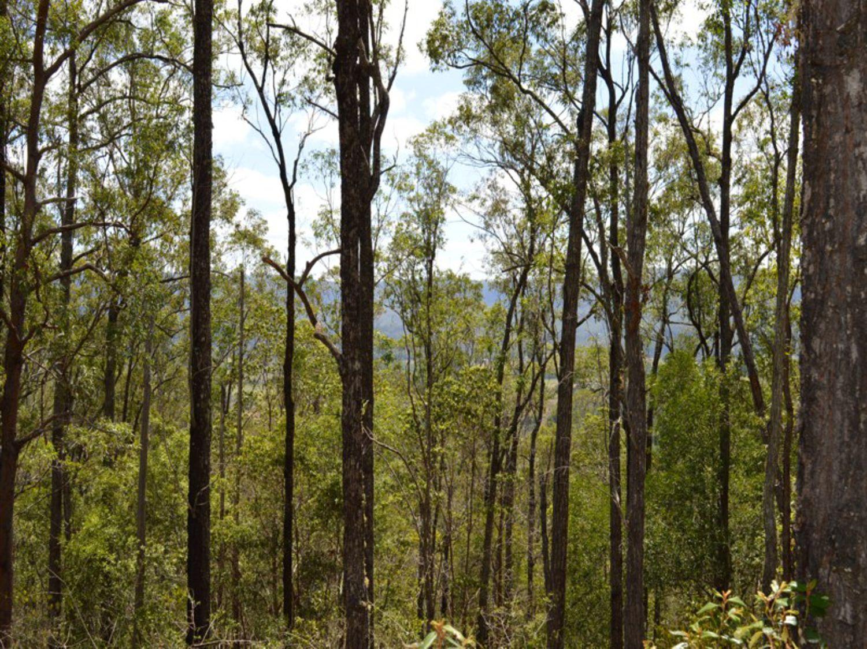 561 Kidaman Creek Road, Kidaman Creek, QLD 4574