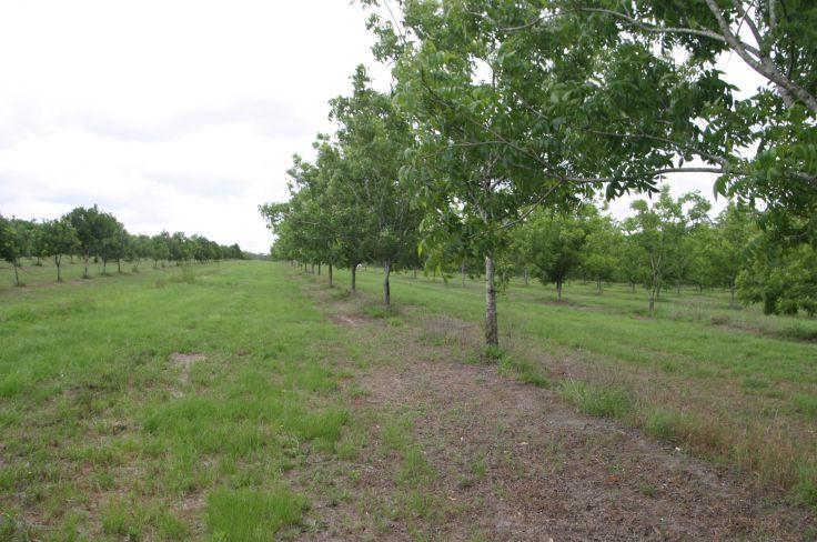 Property For Sale in Bora Ridge