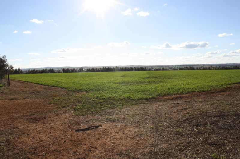 Property For Sale in Junee