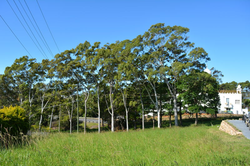 Woolgoolga real estate For Sale