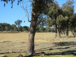 Property in Stanthorpe - $120,000